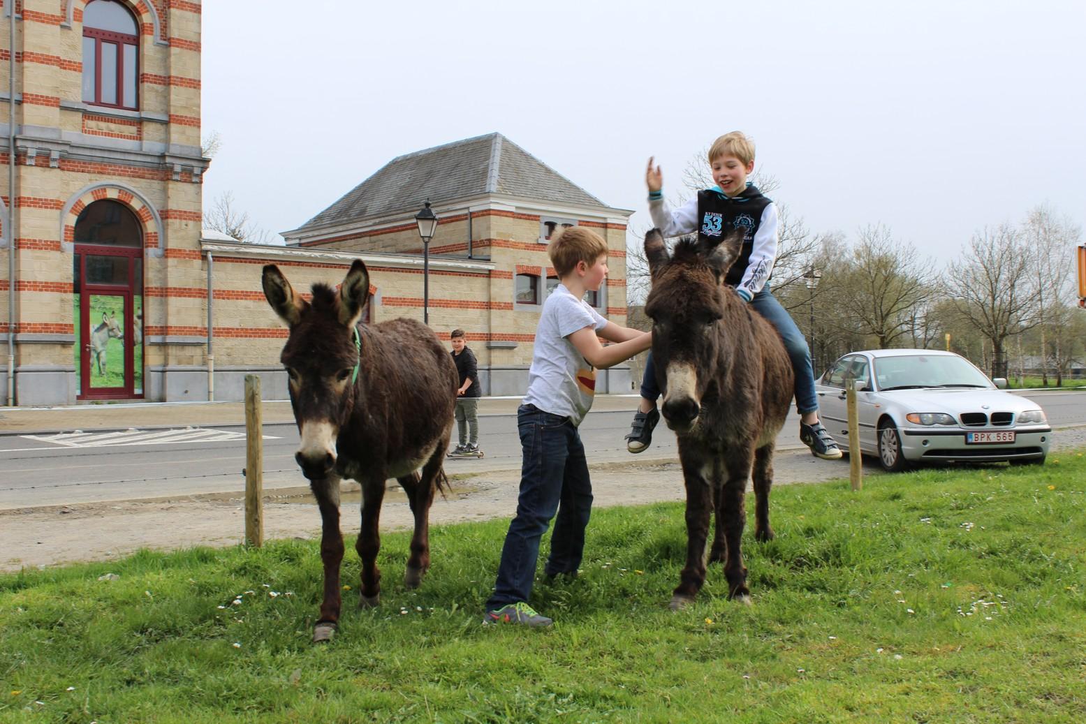 Gabriel et Gaspard avec les ânes